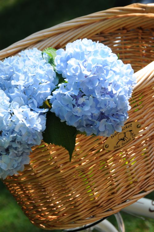 Basket with hydrangeas
