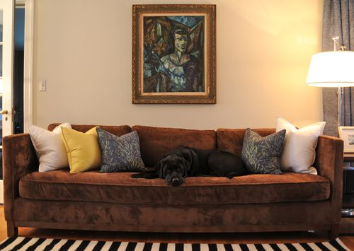 Black lab on sofa